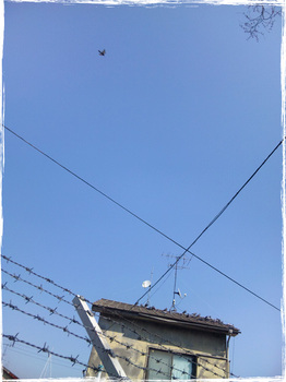 20110328_1347_Kawasaki.jpg