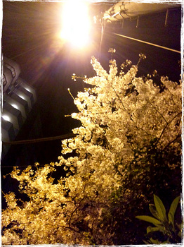 20110412_2111_Kawasaki.jpg